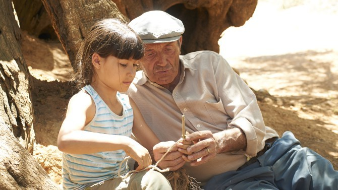 The poignant tale of the Olive Tree